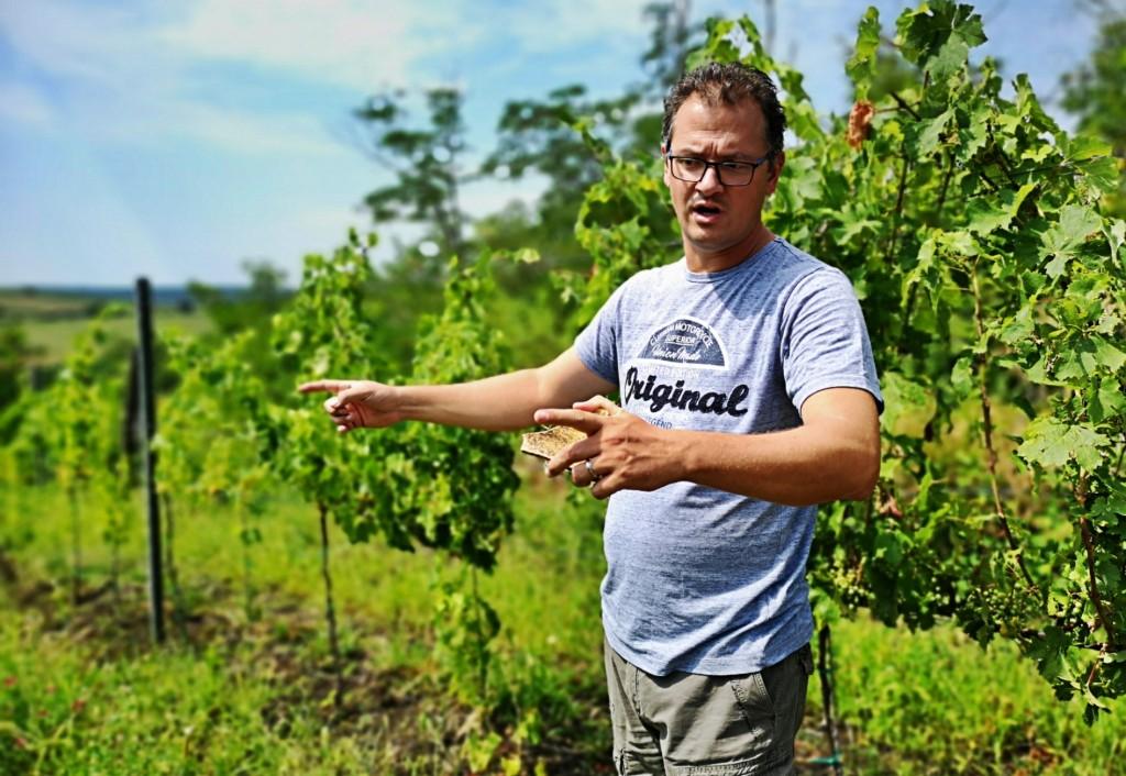 Hajdu Roland a szőlőben